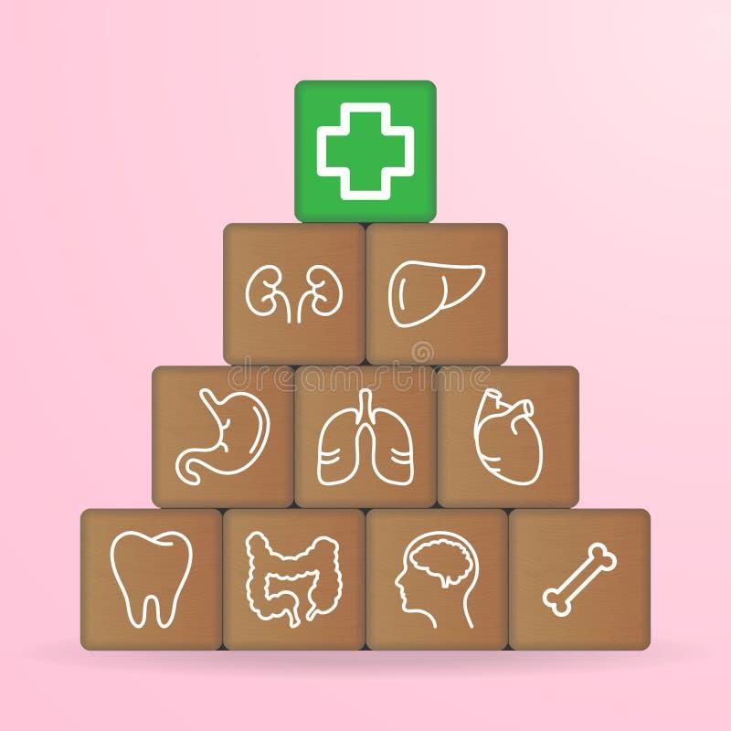 Ludzkich organów ikony Na Drewnianych blokach Odizolowywających Na Białym tle również zwrócić corel ilustracji wektora ilustracja wektor
