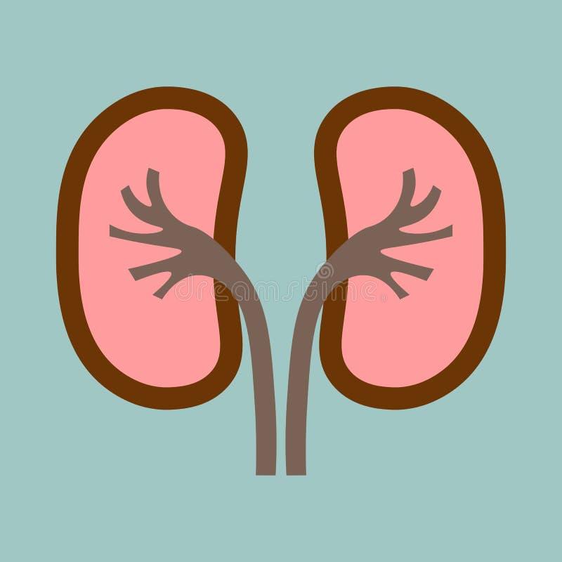 Ludzkich organów cynaderki anatomii medyczna ikona royalty ilustracja