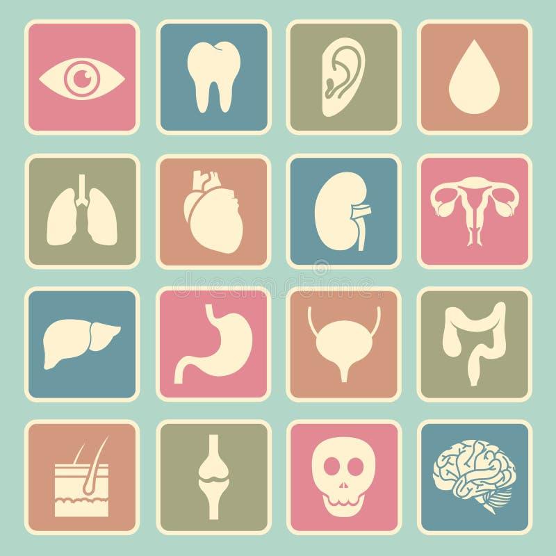 Ludzkich organów ikona ilustracja wektor