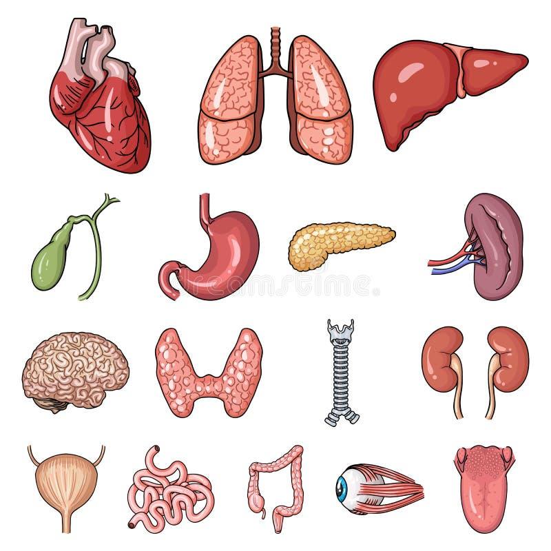 Ludzkich organów kreskówki ikony w ustalonej kolekci dla projekta Anatomii i wewnętrznych organów wektorowy symbol zaopatruje sie ilustracji