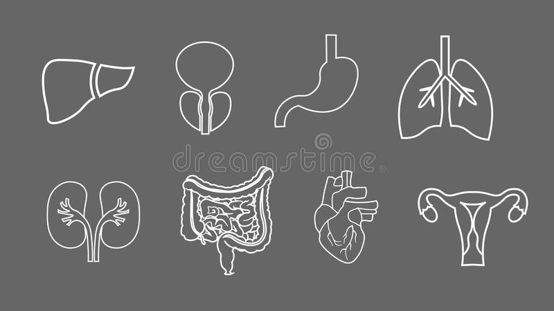 Ludzkich organów kreskowe ikony ustawiać Anatomia ciało Odtwórczy system, płuca, macica, żołądek, serce, wątrobowe ilustracje royalty ilustracja