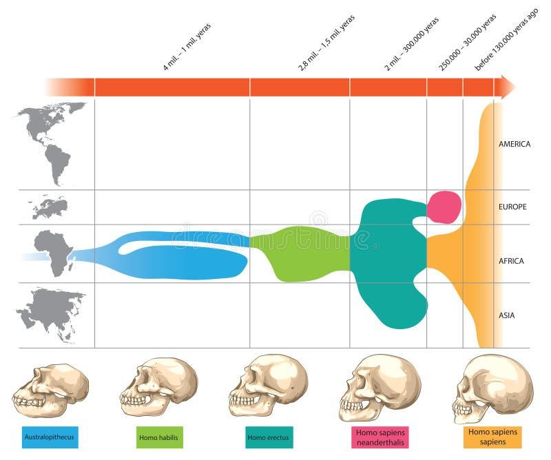 ludzkie czaszki royalty ilustracja