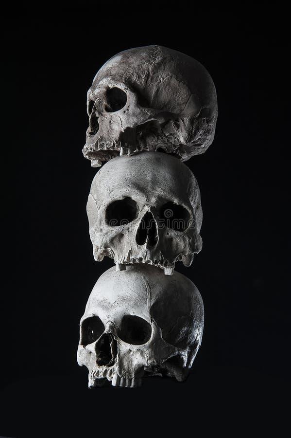 Ludzkie czaszki brogować zdjęcie stock