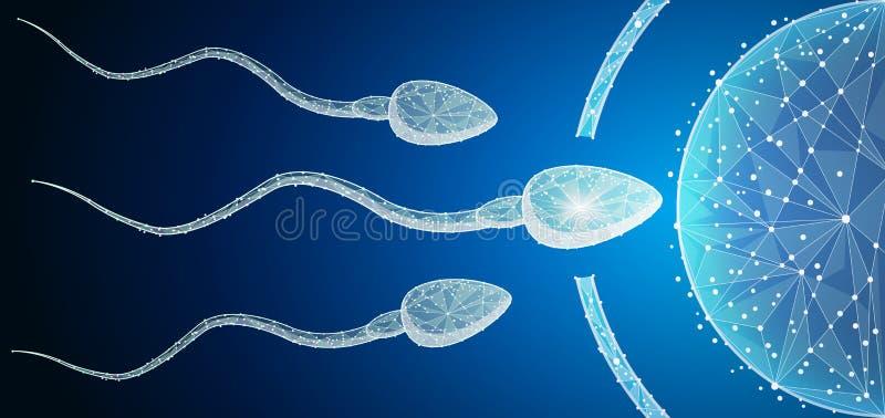 Ludzkie Jajo komórki nawożenie z sperma komórkami Wśrodku macicy royalty ilustracja