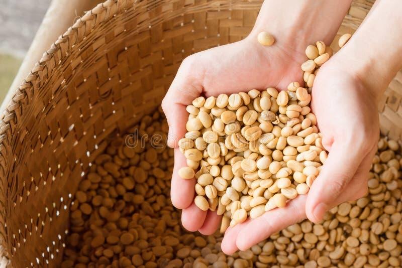 Ludzkie ręki nalewa suche kawowe fasole fotografia royalty free