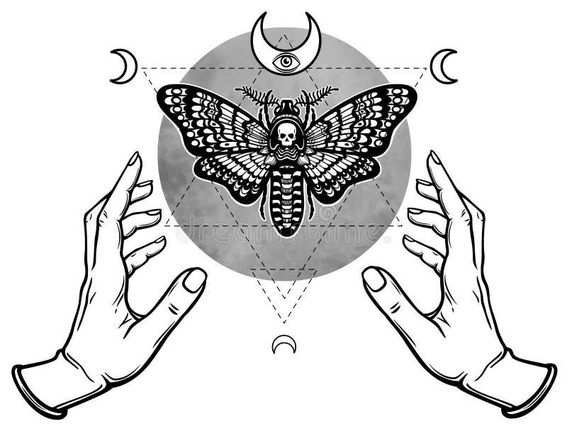 Ludzkie ręki trzymają ćma Nieżywa głowa royalty ilustracja