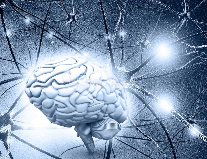 Ludzkiego mózg i neuronu komórki ilustracja wektor