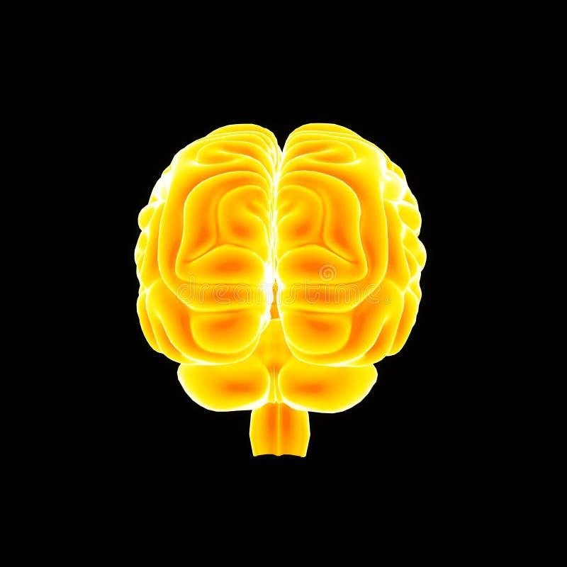 Ludzkiego Mózg posterior widok royalty ilustracja