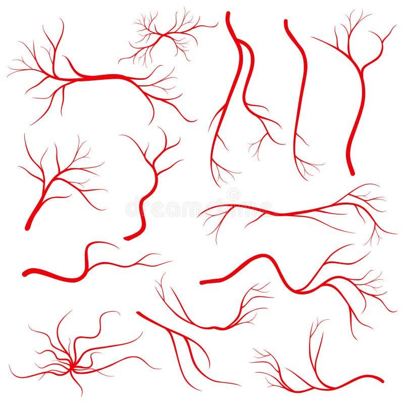 Ludzkiego oka żyły, naczynie, krwionośne arterie odizolowywać na białym wektoru secie ilustracji