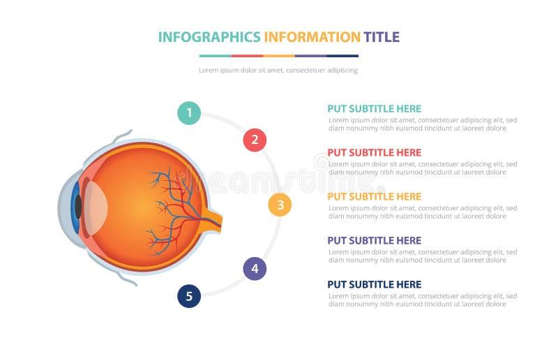 Ludzkiego oka anatomii szablonu infographic pojęcie z pięć punktami spisuje i różnorodny kolor z czystym nowożytnym białym tłem - ilustracji