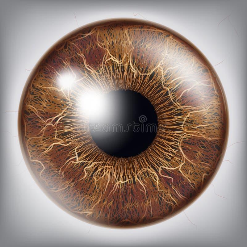 Ludzkiego oka irysa wektor 3D gałki ocznej Realistyczna ilustracja ilustracji