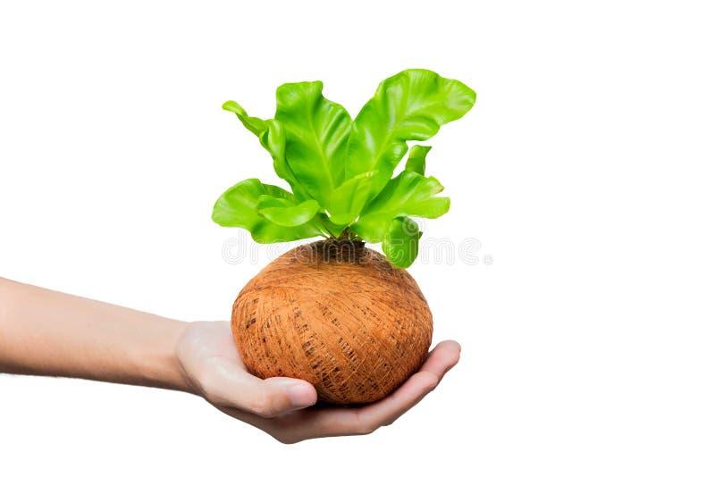 Ludzkiego ręki mienia młoda zielona roślina w garnkach zdjęcia stock
