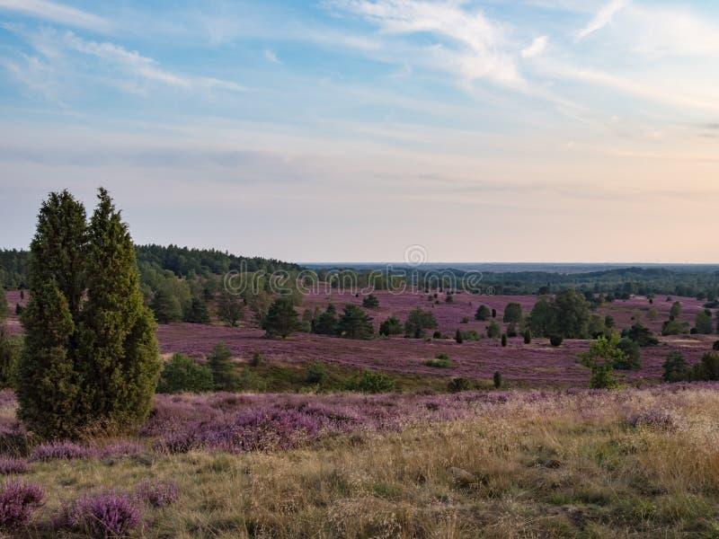 Lueneburg Heath, synvinkel från Wilseder Berg arkivfoton