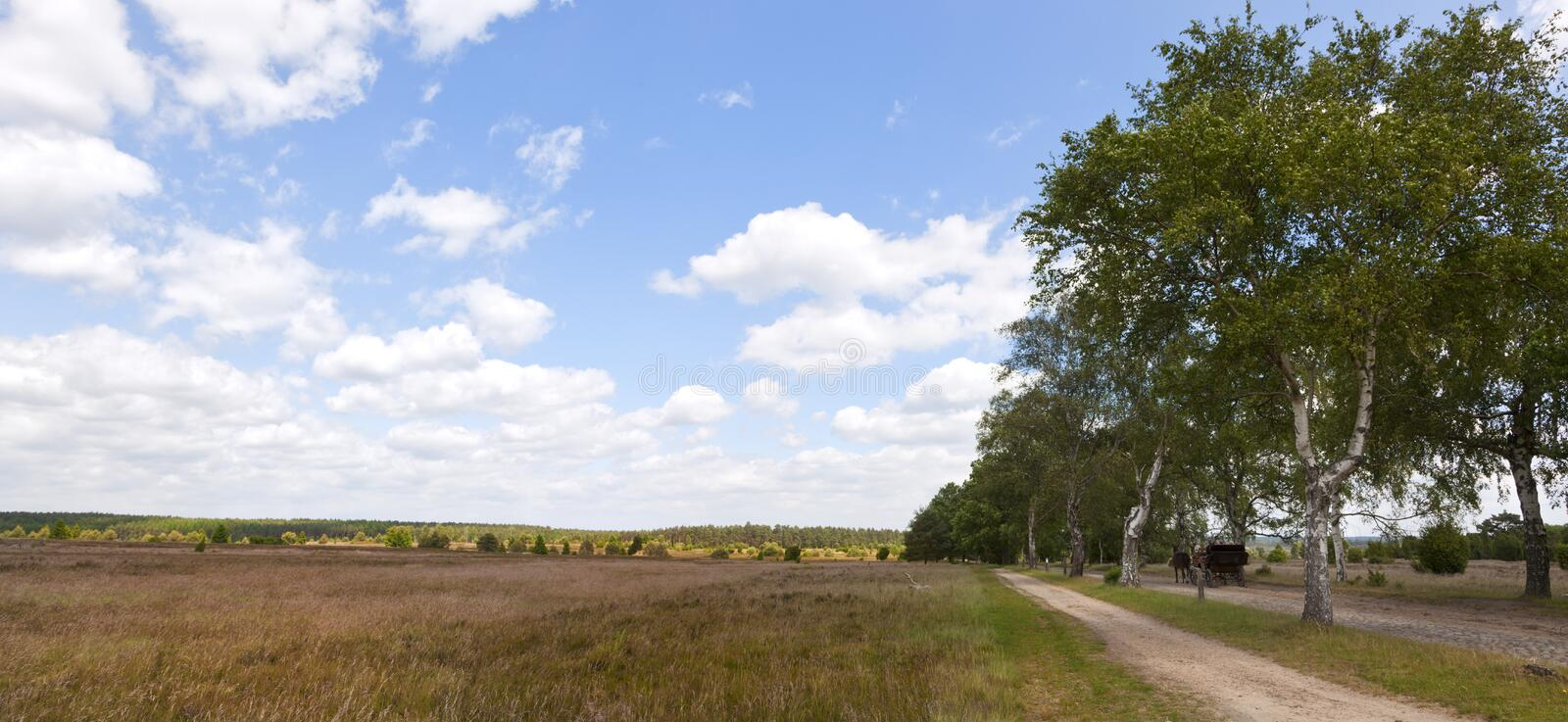 Download Lueneburger Heath Panorama stock image. Image of carriage - 25227391