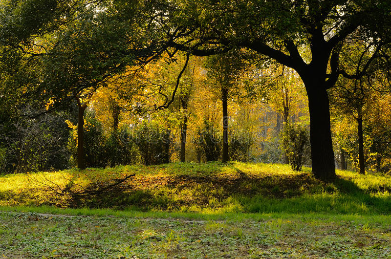 Lueur de coucher du soleil dans des forêts images libres de droits