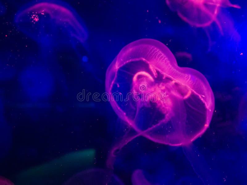 Lueur de méduses dans l'obscurité photos stock