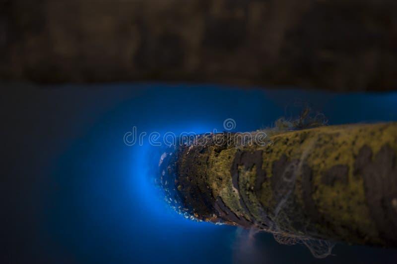 Lueur de Marine Plankton dans l'obscurité photographie stock