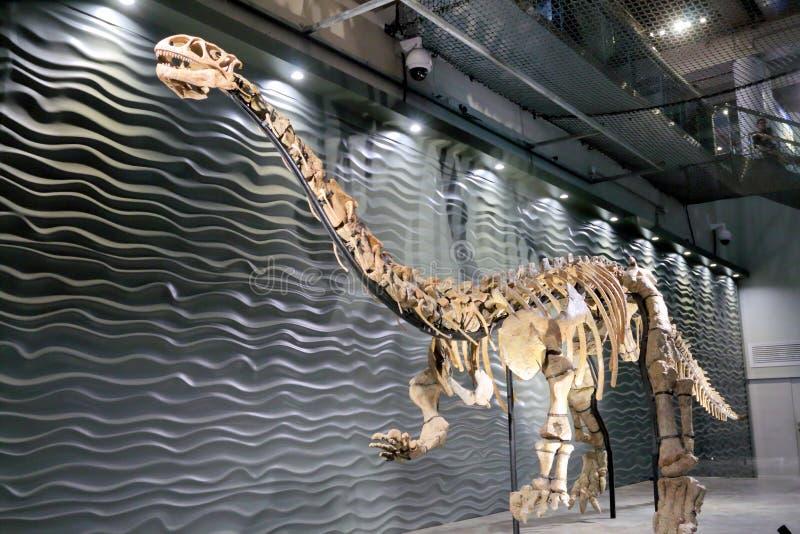 Lufengosaurus Magnus imagen de archivo