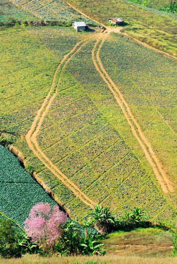 Luftaufnahme der Bauernhoffelder lizenzfreies stockbild