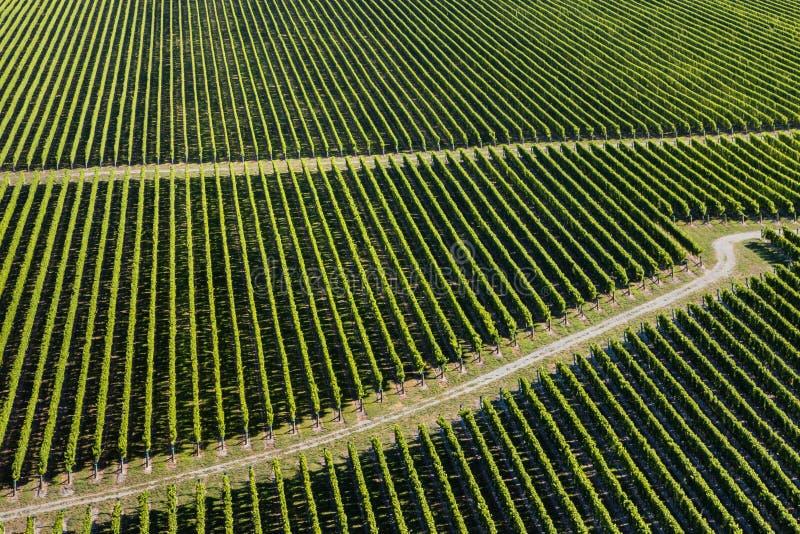 Luftaufnahme der Weinberge lizenzfreies stockbild