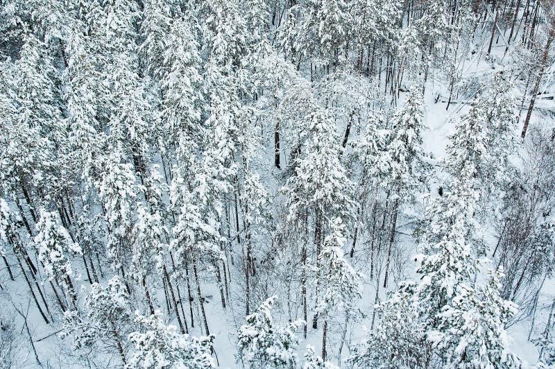 Luftaufnahme des Winterwaldes stockbild