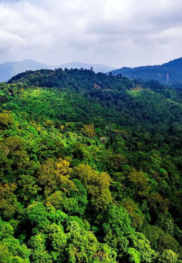 Luftaufnahme des Waldes lizenzfreie stockfotos