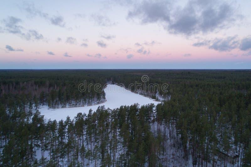 Luftaufstiegsflug über Winterkiefernwald am dunklen Abend nach Sonnenuntergang lizenzfreie stockbilder