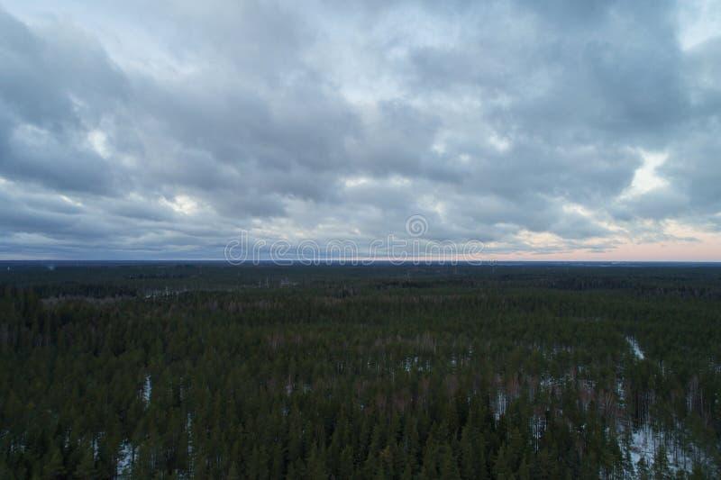 Luftaufstiegsflug über Winterkiefernwald am dunklen Abend nach Sonnenuntergang lizenzfreies stockbild