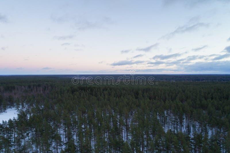Luftaufstiegsflug über Winterkiefernwald am dunklen Abend nach Sonnenuntergang lizenzfreie stockfotografie