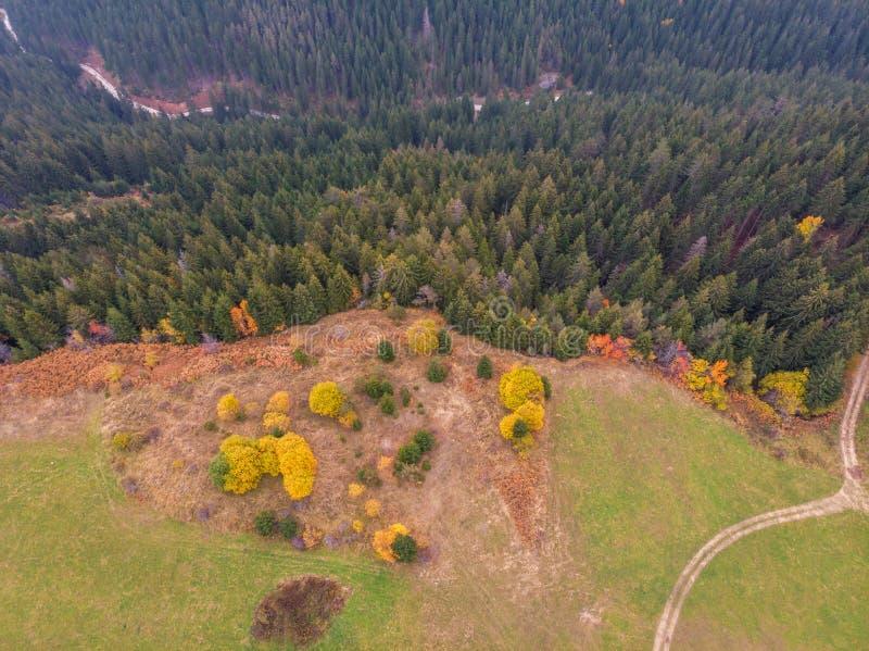 Luftbrummenansicht über einen Wald mit bunten Blättern während der Herbstzeit lizenzfreie stockbilder