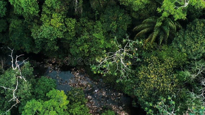 Luftbrummenbild des Regenwaldes und des kleinen Flusses an Nationalpark Amboro, Bolivien stockfotografie