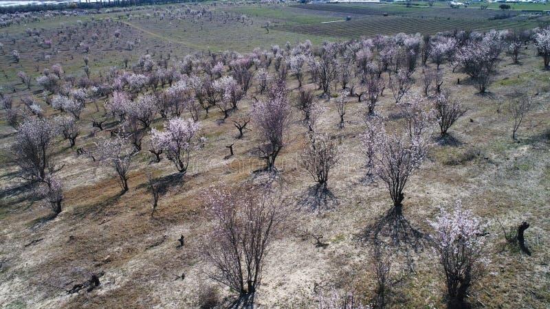 Luftlandschaftsansicht des Ackerlandes, der gr?nen Felder und der seltenen Str?uche auf blauem Hintergrund des bew?lkten Himmels  stockbild