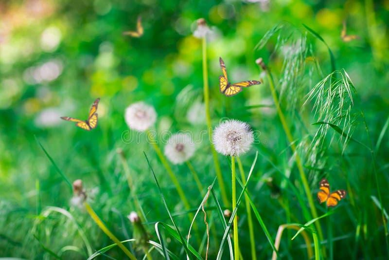 Luftmaskrosor på ett grönt fält royaltyfria foton