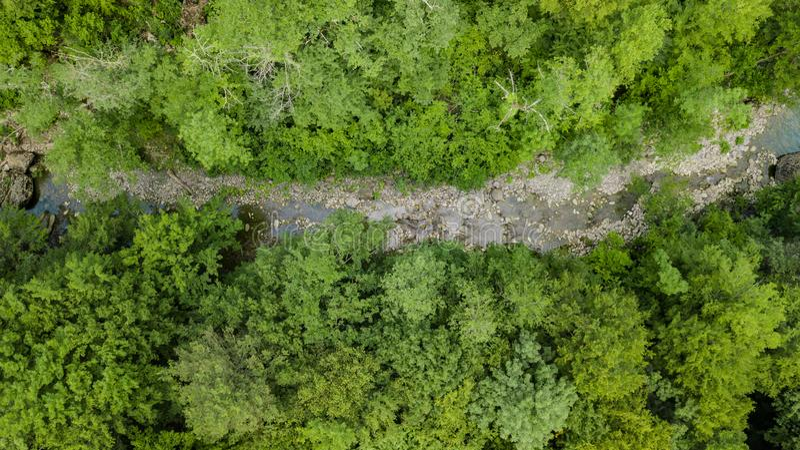 Luftspitzen-unten Ansicht des Kaukasus Forest Trees stockfoto