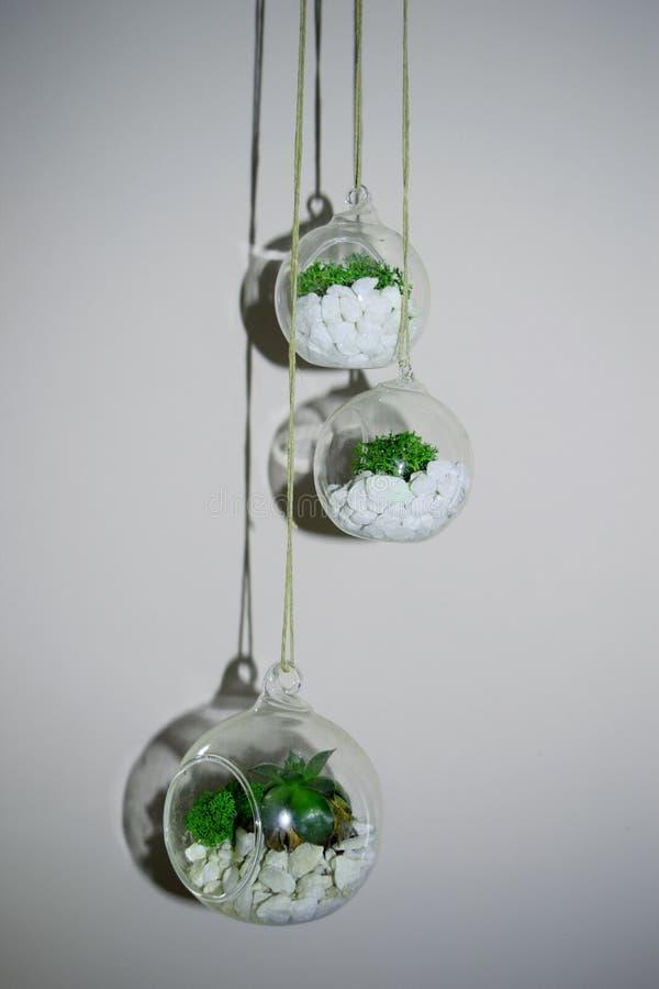 Luftväxter i den glass bollen royaltyfri bild