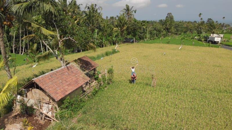 Luftvideo des brummens 4K von jungen Paaren auf dem Reisfeld Landschaft von Bali-Insel lizenzfreie stockfotos