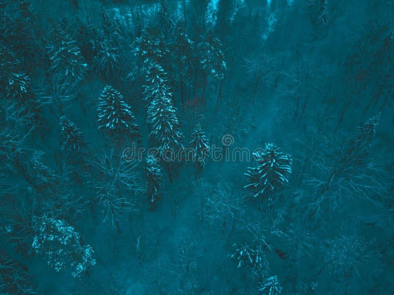Luftwinterwaldansicht Brummenlandschaft, fliegen oben Weiße Bäume mit Schnee, schöner Tapetenhintergrund Hohes modernes photogra lizenzfreie stockbilder