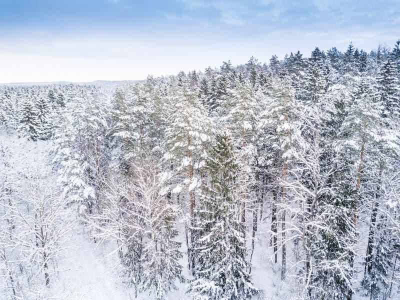 Luftwinterwaldansicht Brummenlandschaft Weiße Bäume mit Schneehintergrund Hohes modernes photogra stockfoto