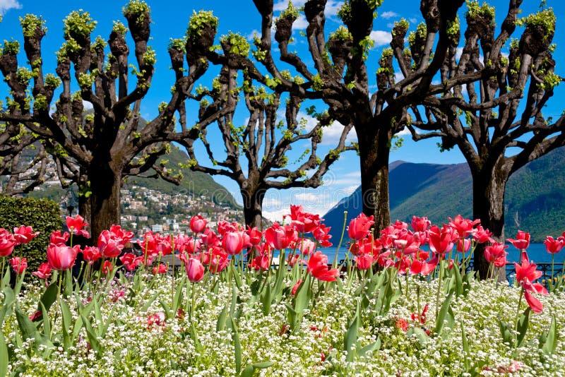 Download Lugano stock image. Image of lugano, flowering, mountain - 24345841