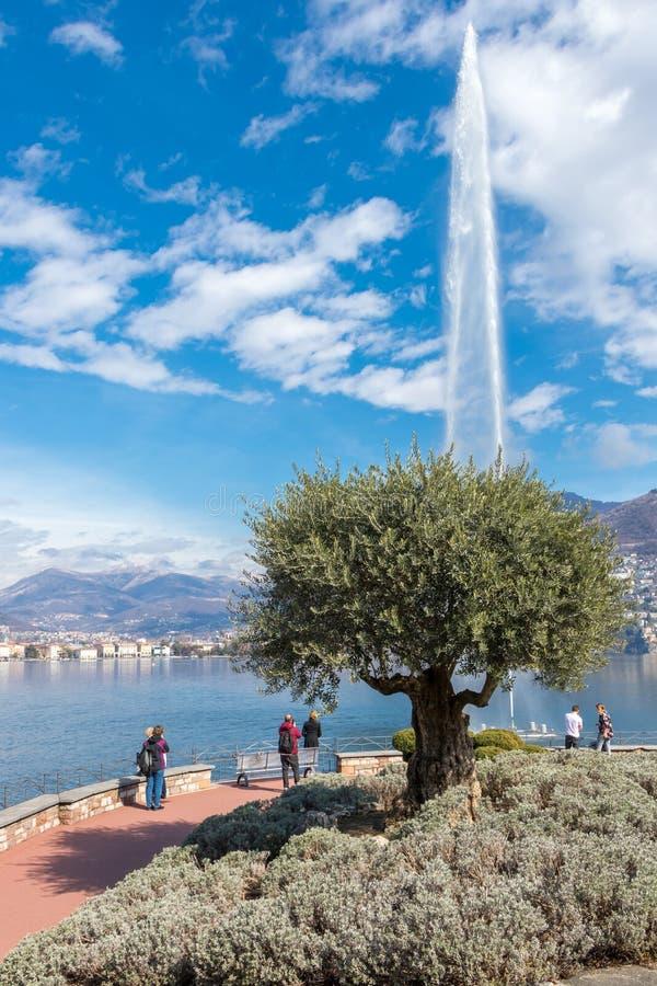 Lugano, die Schweiz - 10. März 2019: Brunnen in der Stadt von Lugano, ein Olivenbaum im italienischen Teil von der Schweiz lizenzfreie stockfotografie