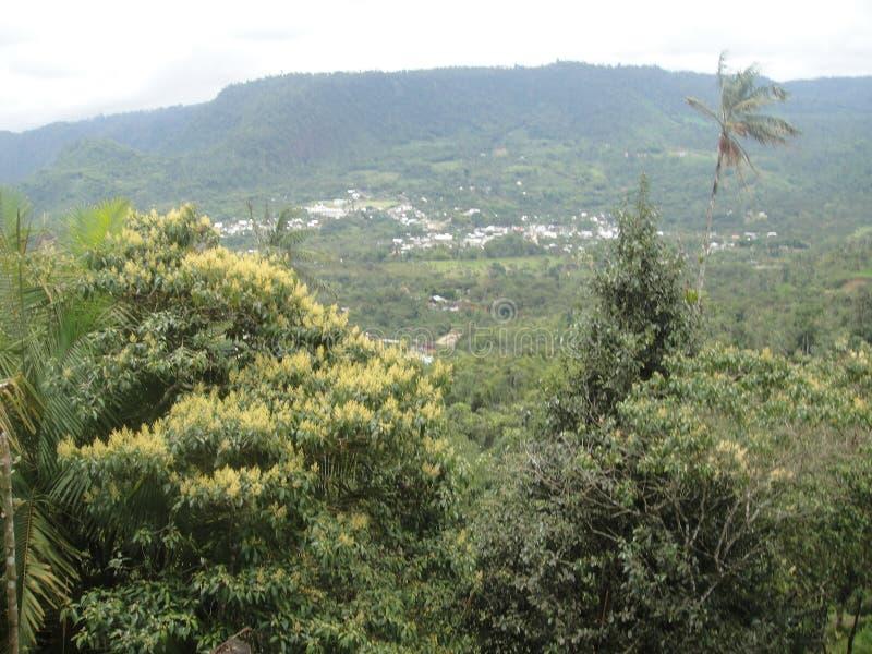 Lugar bonito Quito de MINDO foto de stock royalty free
