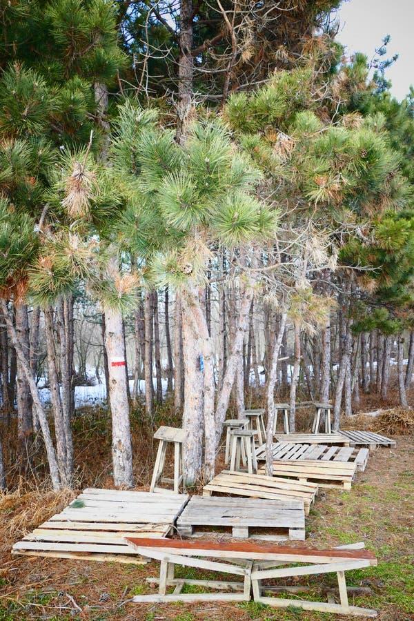 Lugar da floresta foto de stock