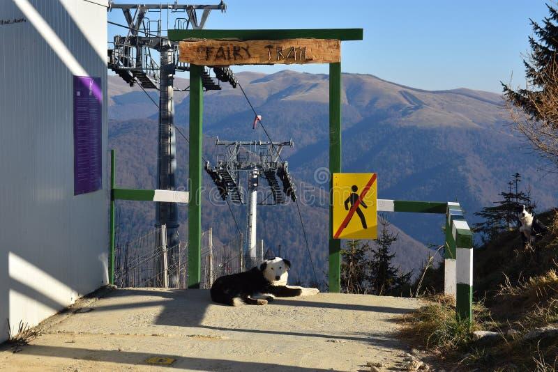 Lugar da fuga feericamente para entusiastas biking de montanha em montanhas de Bucegi, Sinaia do começo imagem de stock