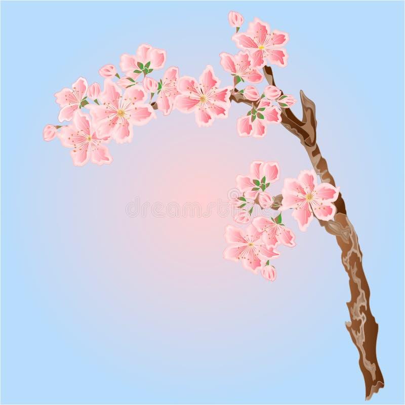 Lugar de la primavera de las flores de cerezo para el vector del texto stock de ilustración