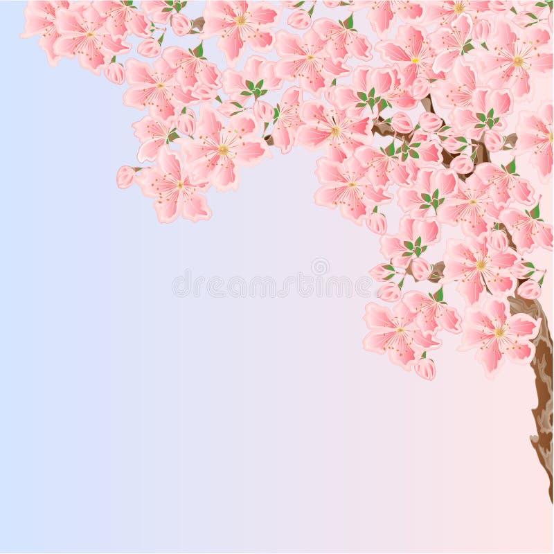 Lugar de la primavera de los flores de Sakura de la cereza para el vector del texto libre illustration