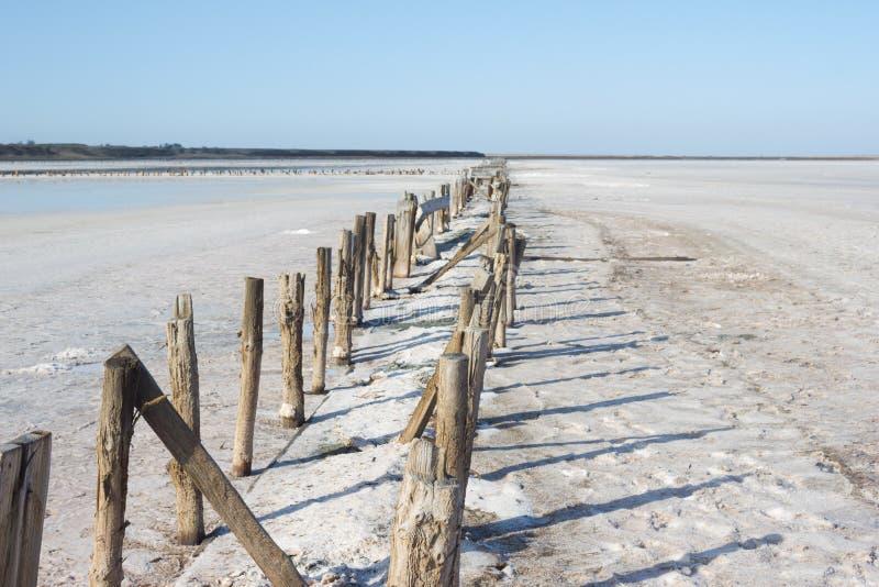 Lugar de produção de sal do mar do alimento - planta fotos de stock royalty free