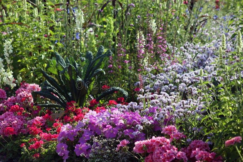 Lugar do jardim de florescência do verão com pelargonium e petúnia fotografia de stock