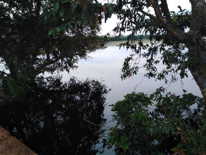 Lugar escuro perto dos lugares escuros dos lagos sob as sombras enormes das árvores fotografia de stock