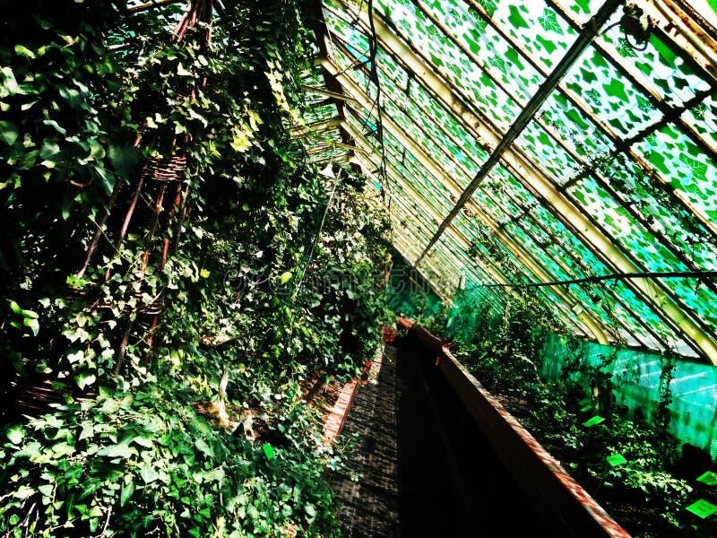 Lugar hermoso del aw del 'de WrocÅ foto de archivo