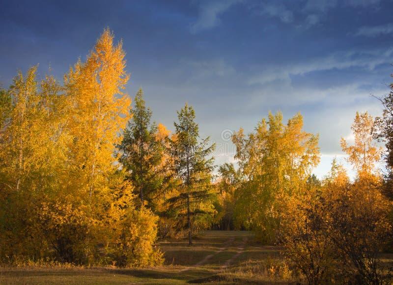 Lugar pitoresco do outono O sol de ajuste pinta as árvores douradas fotos de stock royalty free